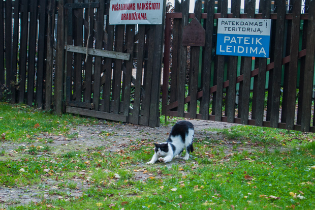 baltic_686.jpg